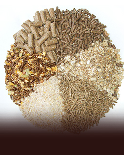 Production of feed and feed additives