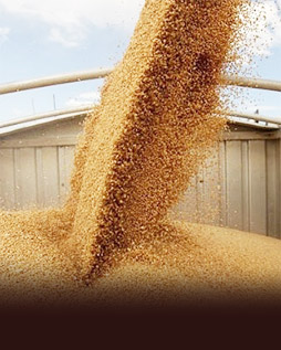 Services drying and storing grain